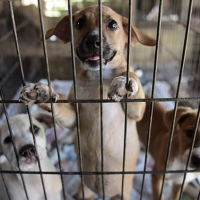 APTOPIX Puerto Rico Hurricane Abandoned Animals_1518440998621