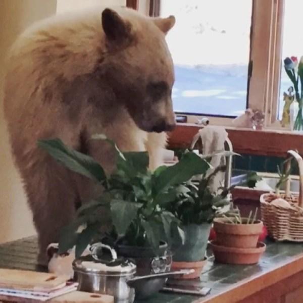 bear breaks into tahoe home_1525445652259.jpg-846653543.jpg