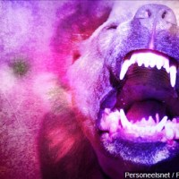 Canine Attack dog Attack pit bull Attack_1541442669347.jpg