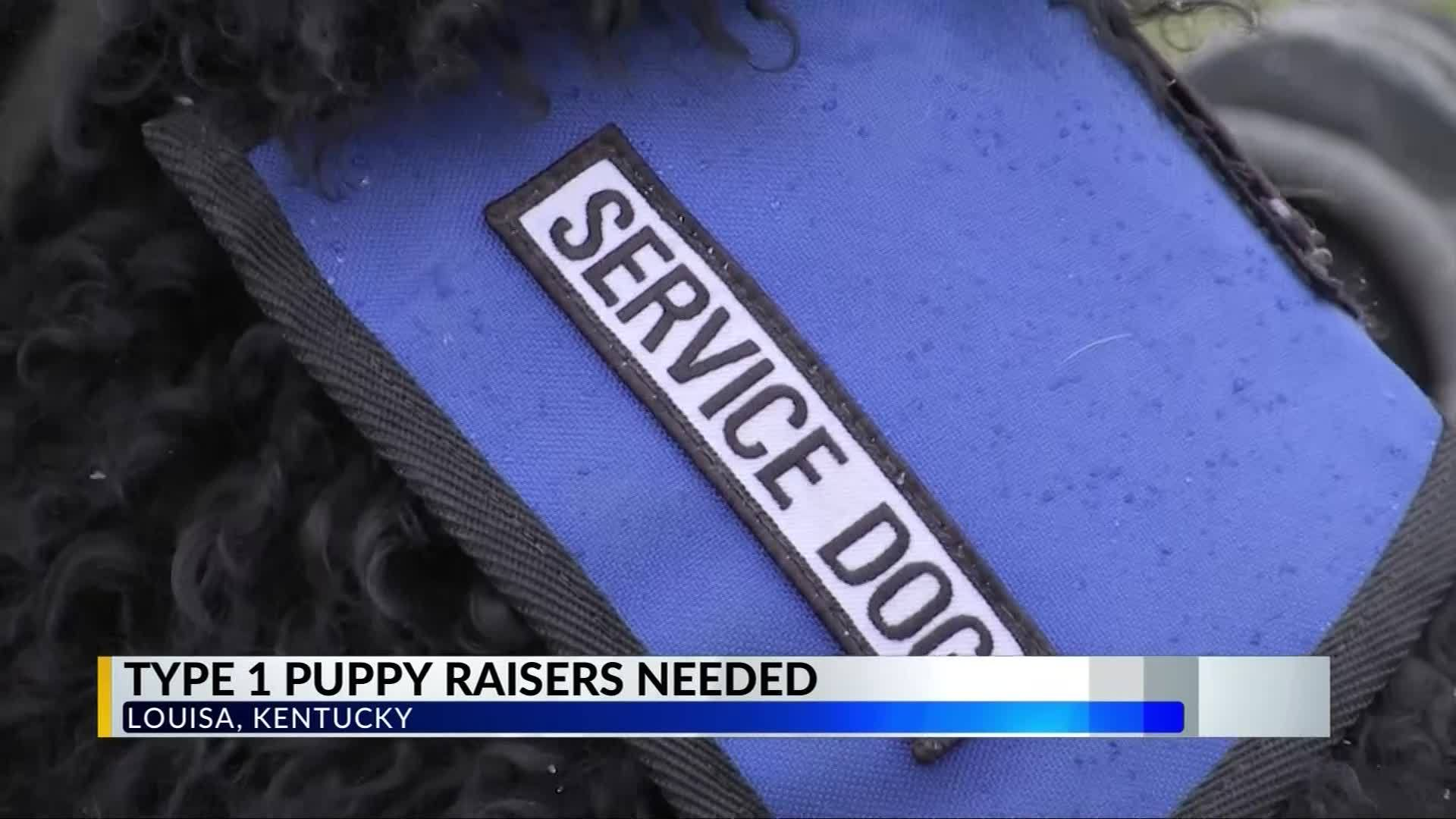 Type 1 diabetic service dogs in need of puppy raisers