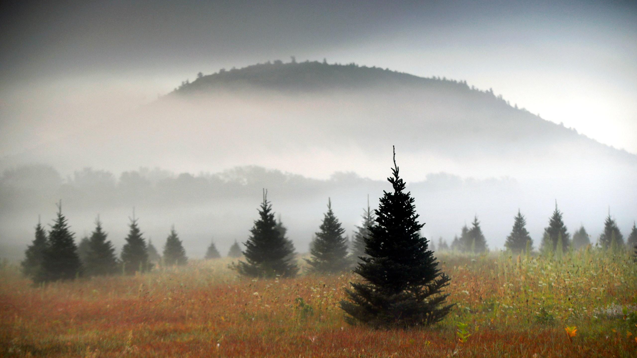 Amazon_Christmas_Trees_83450-159532.jpg15222750
