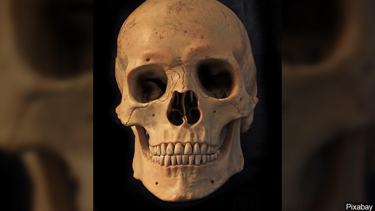 Human Skeleton Skull Bones_1555074599910.jpg