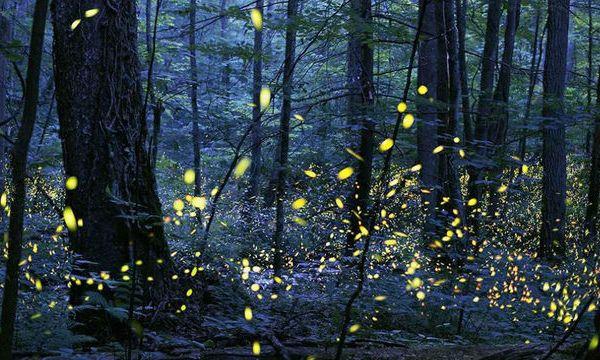 Firefly PROVIDED_1556097841232.jpg_84023648_ver1.0_640_360_1556109968682.jpg.jpg