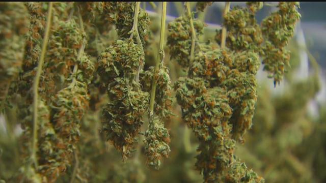Marijuana Plants_1510951468368.jpg
