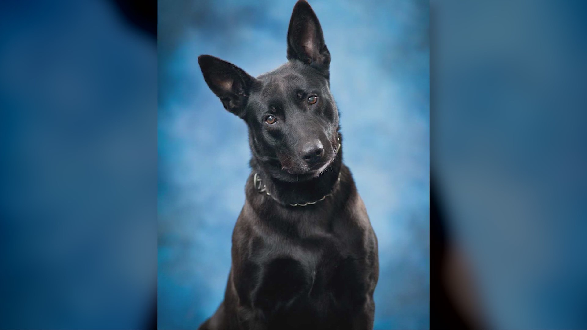 Charleston Police say goodbyes to K-9 Officer Jux