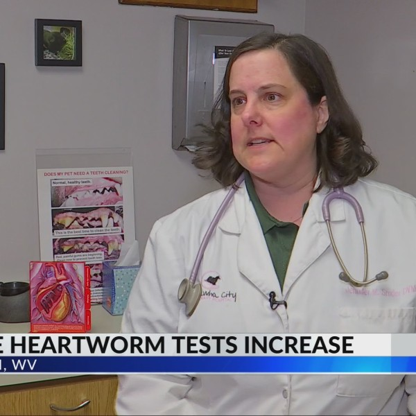 Report: Charleston Among Highest Percent Increases in Positive Heartworm Tests